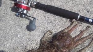 堤防からのタコ釣りを始めてみよう 釣り方を解説!